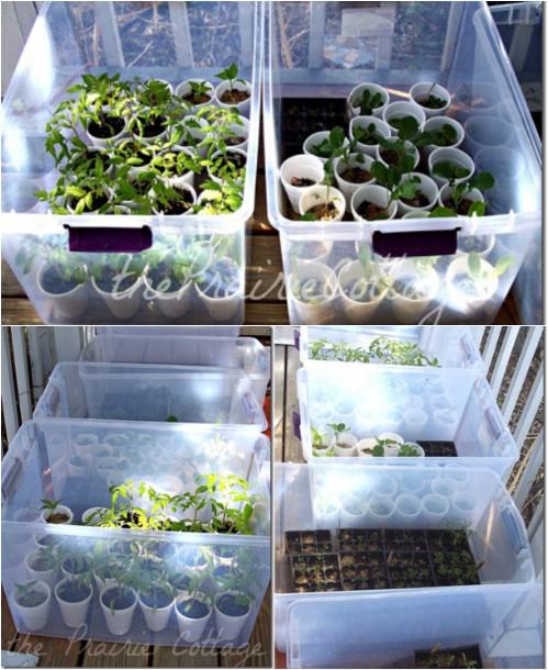 18-mini-greenhouse