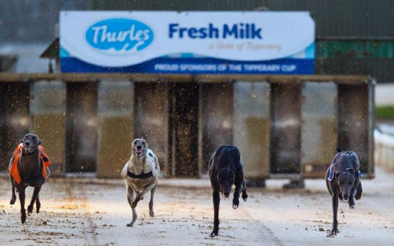 Thurles Greyhound Race Card for Saturday night Jan 21th