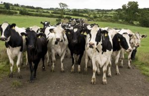 DAIRY MARKET REPORT 13th MAY