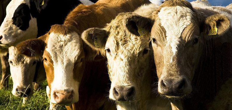 EU COMMISSION SUPPORT OF €50M PAVES THE WAY FOR €100M BREXIT BEEF AID PACKAGE