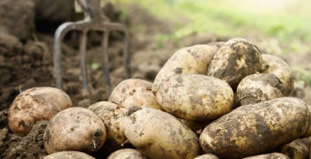 POTATO MARKET UPDATE 29th MAY