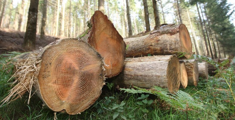 IFA TIMBER PRICES APRIL – JUNE 2019