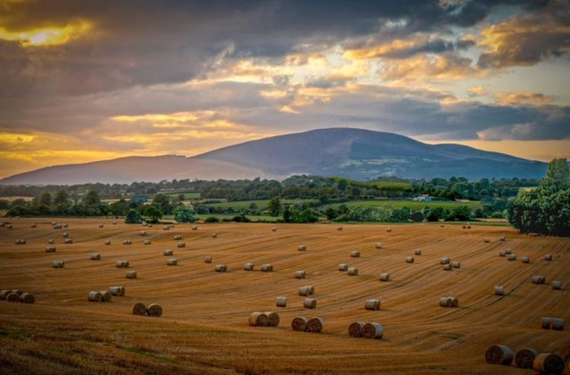 VALUE OF STRAW RECOGNISED AS COMPOSTERS MOVE TO CONTRACTS