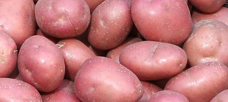 POTATO MARKET UPDATE 7th AUGUST