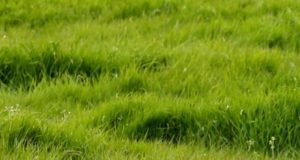 IFA CALLS ON GREEN PARTY TO SUPPORT BEEF & DAIRY