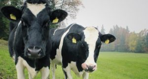DAIRY CO-OPS MUST HEED STABLE EUROPEAN PRICES