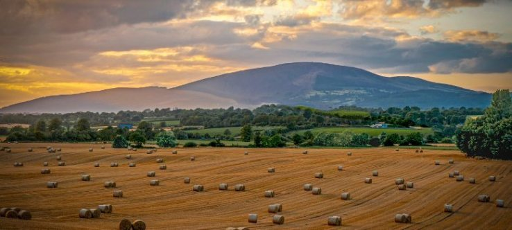 GRAIN MARKET UPDATE 4th SEPTEMBER